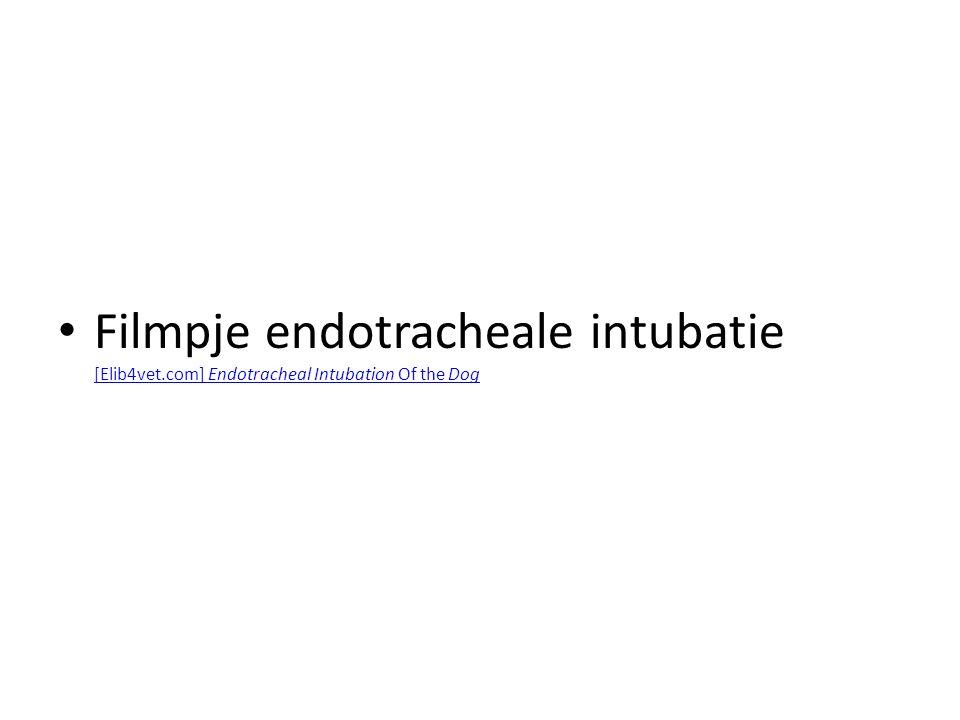 Filmpje endotracheale intubatie [Elib4vet